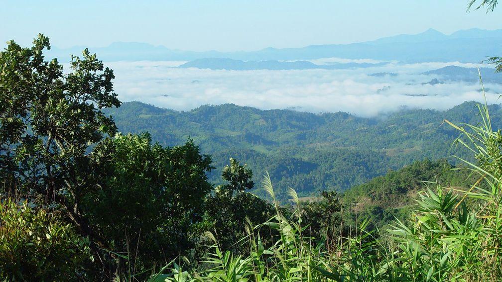 Tha 239 Lande Le Triangle D Or Voyage Chiang Mai Les