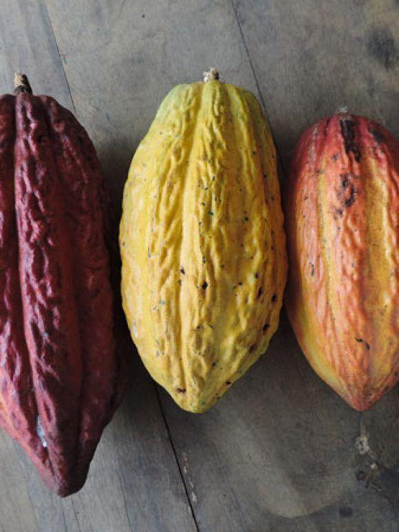 Comment les grands crus de cacao d'Amérique ont conquis la planète ?