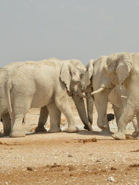 Conservation et Développement En Afrique/ Témoignage d'expériences